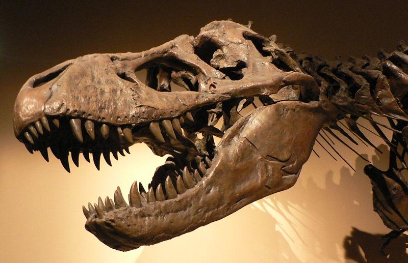 Dinozor Fosili