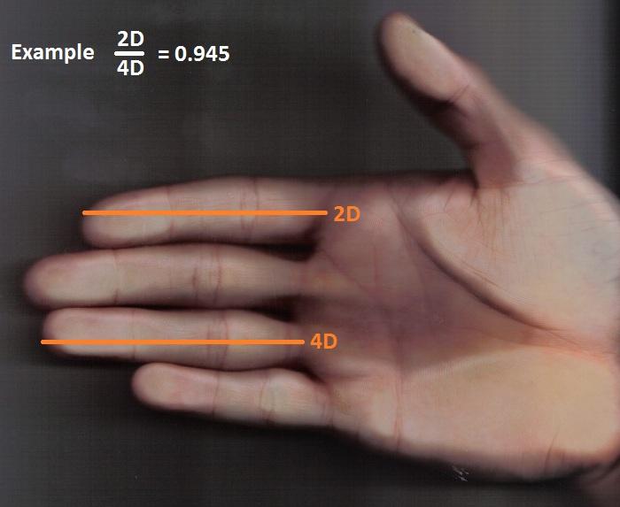 2D:4D