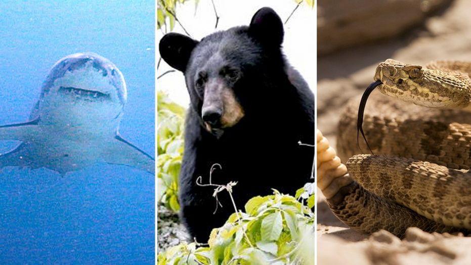 hayvanlar sosyal medya