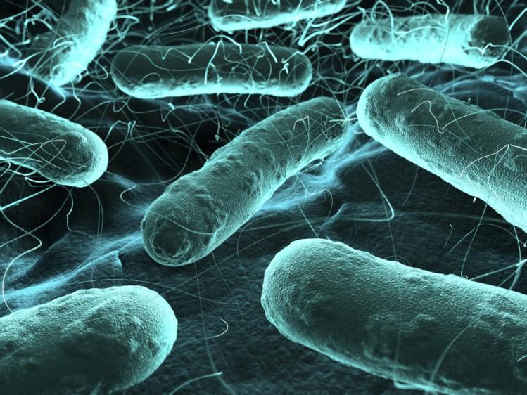 Bakteri antibiyotik bağışıklığı